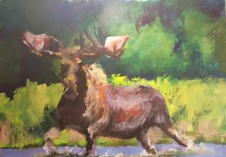 Ricketson  Moose Splashing. 30x40